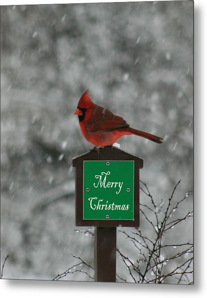 Christmas Cardinal Male Metal Print