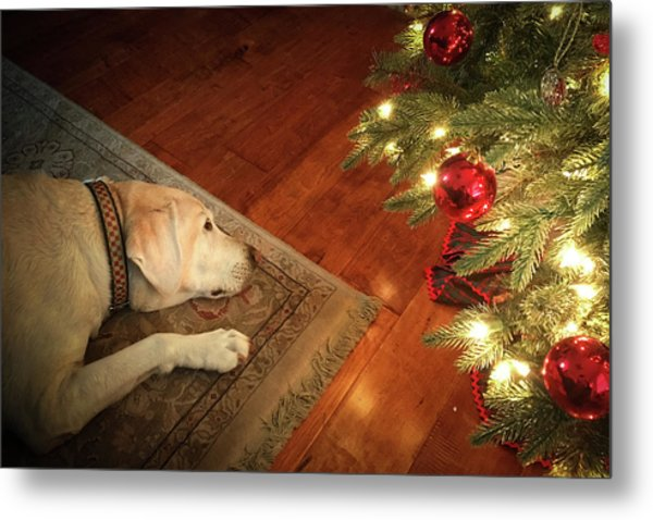 Christmas Dreams Metal Print