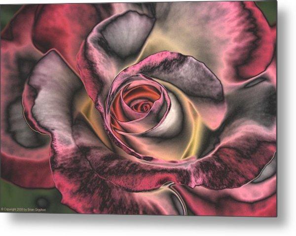 Chrome Rose 368 Metal Print