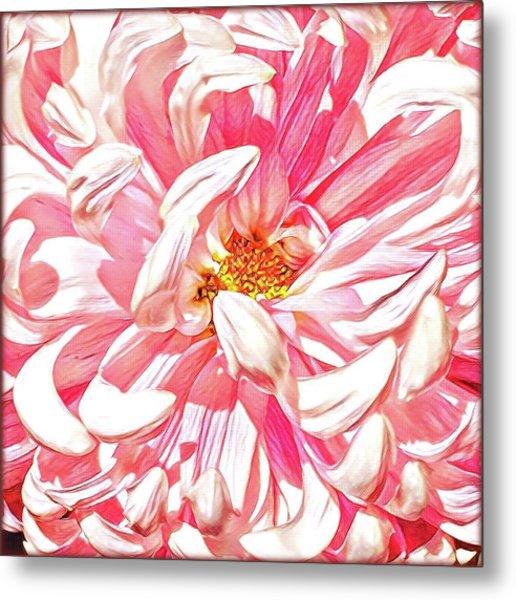 Chrysanthemum In Pink Metal Print