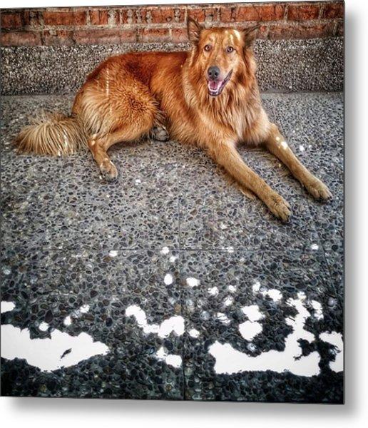 Chuvak #dog #animal #pet #portrait Metal Print