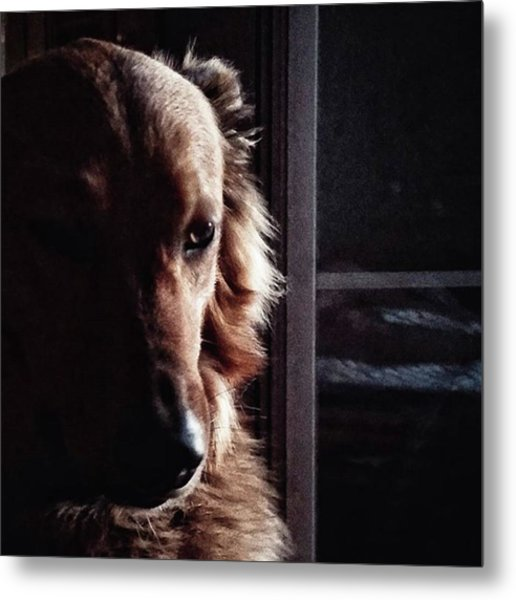 Chuvak #portrait #dogsofinstagram #dog Metal Print