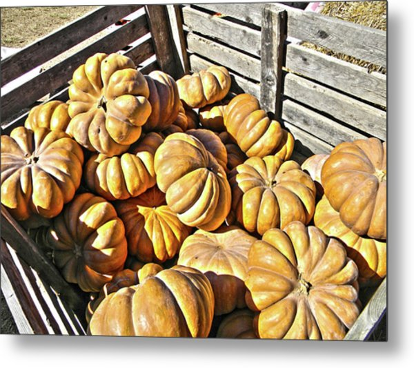 Metal Print featuring the photograph Cinderella Pumpkins by Pacific Northwest Imagery