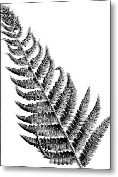 Cinnamon Fern Metal Print by Louis Dallara