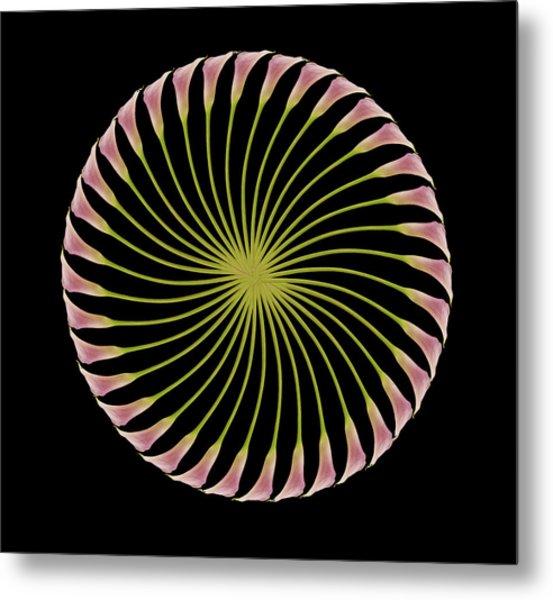 Circle Of Lily Metal Print by Jon Daly