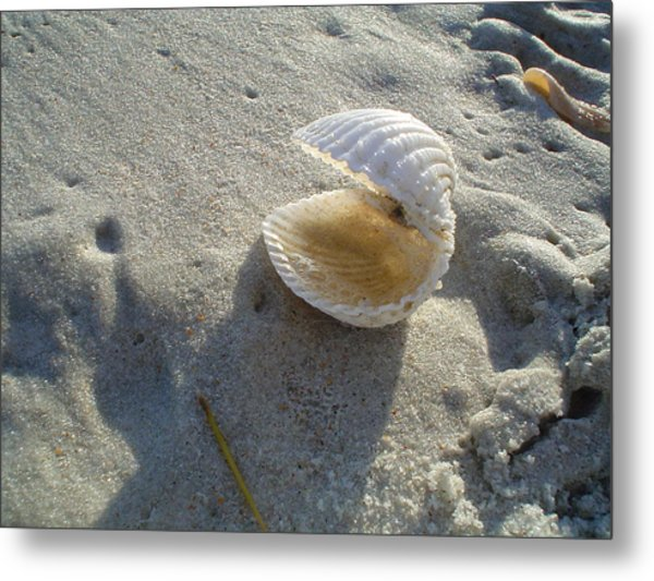 Clam Quarters Metal Print