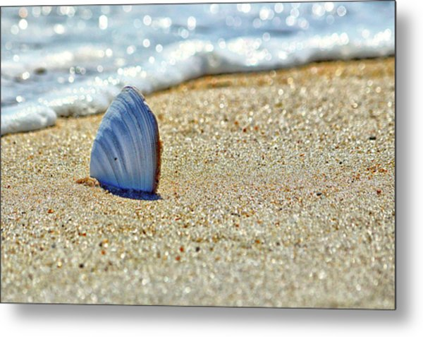Clamshell In The Waves On Assateague Island Metal Print