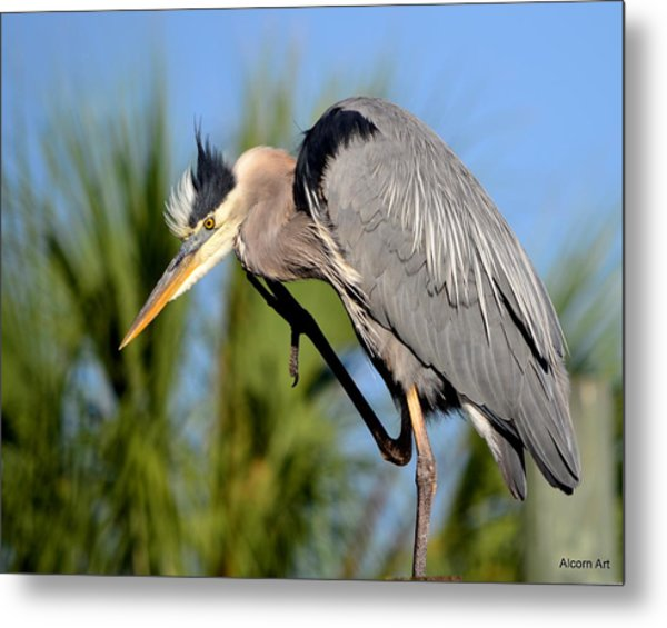 Cleaning Up Metal Print by Brenda Alcorn