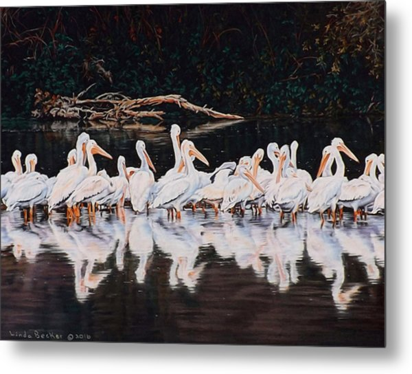 Clear Lake Pelicans Metal Print