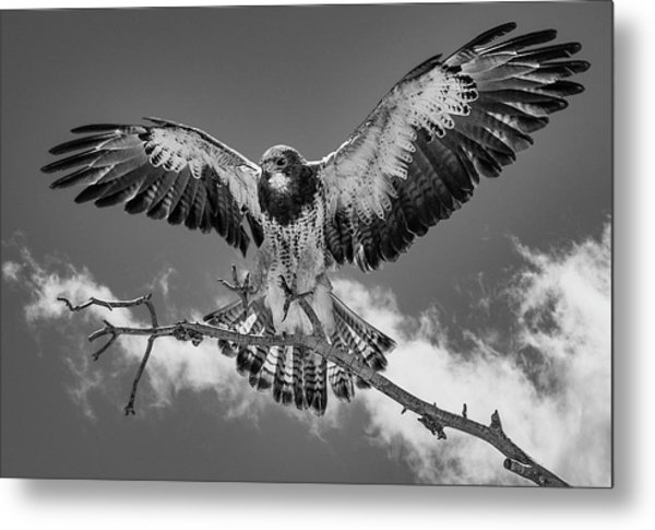 Cleared For Landing 2 Metal Print