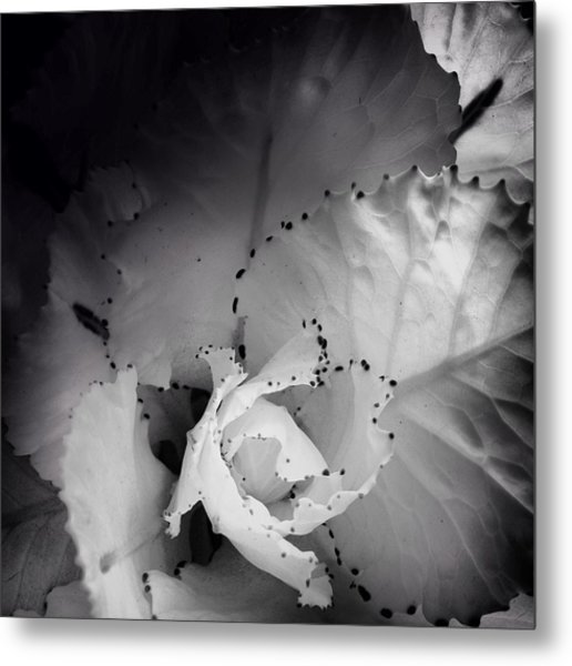 Clearly Bloomed Metal Print