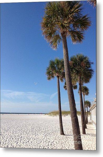 Clearwater Palms Metal Print