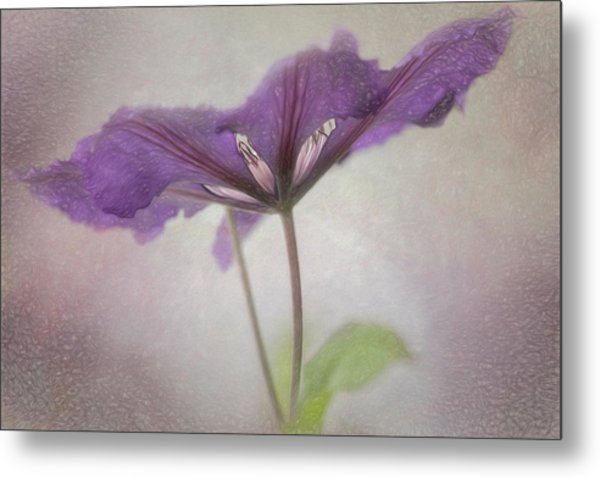 Clematis Eyes Metal Print