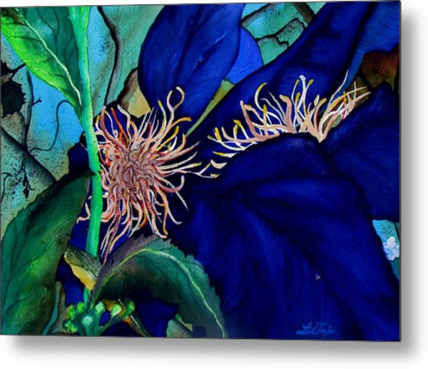 Clematis Regal In Purple And Blue Sold Metal Print