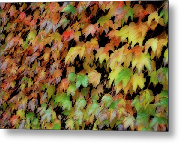 Climbing Color Metal Print by JAMART Photography
