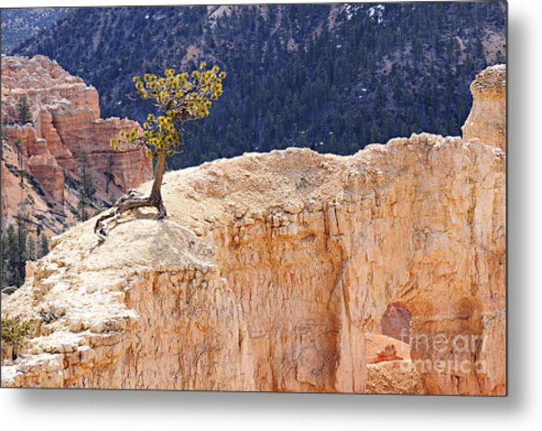 Clinging To The Top Of The Wall Metal Print