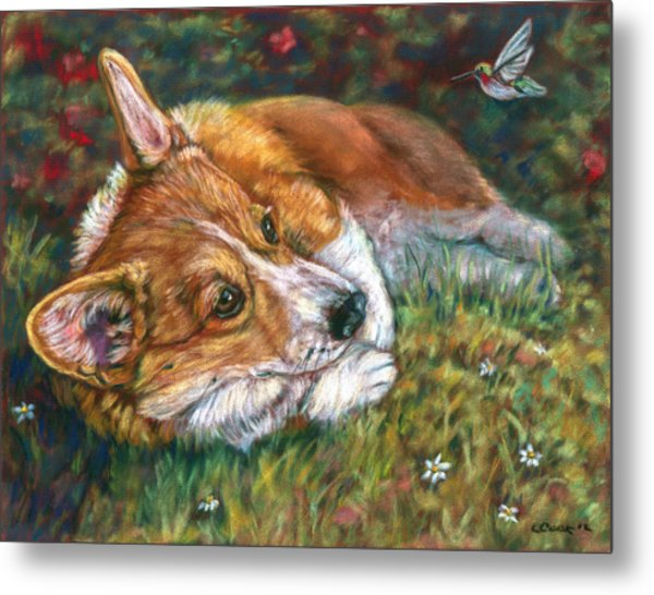 Close Encounter - Pembroke Welsh Corgi Metal Print