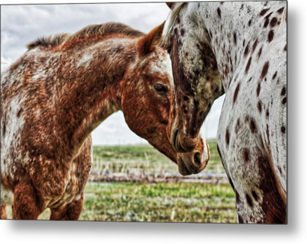 Close Friends Metal Print