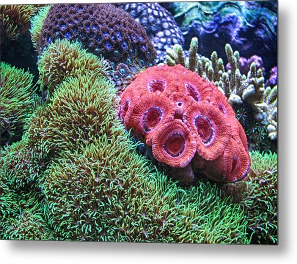 Close Quarters Metal Print