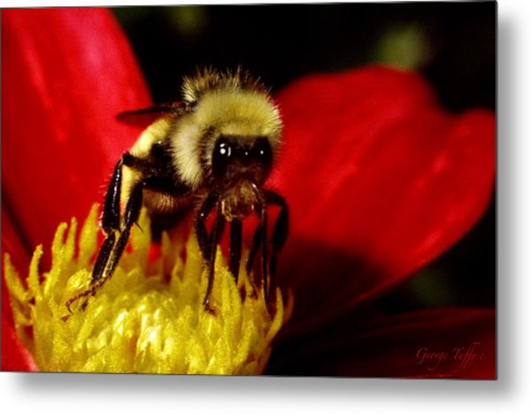Close Up Bee Metal Print