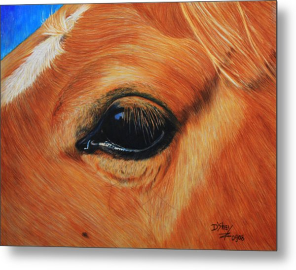 Close Up Of A Horse Metal Print by Don MacCarthy