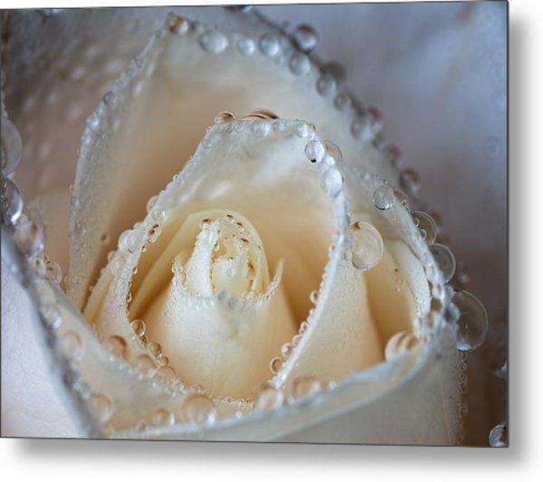 Close Up White Rose Metal Print