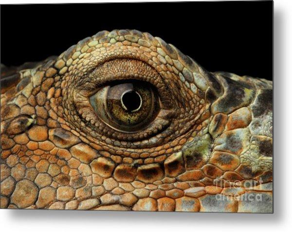 Closeup Eye Of Green Iguana, Looks Like A Dragon Metal Print
