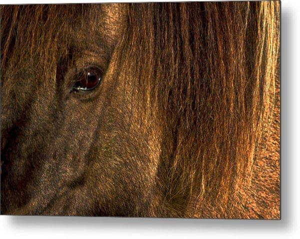 Closeup Of An Icelandic Horse #2 Metal Print