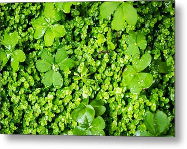 Lush Green Soothing Organic Sense Metal Print