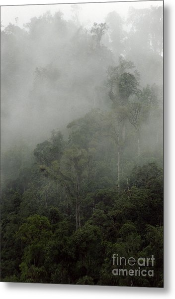 Cloud Forest Metal Print