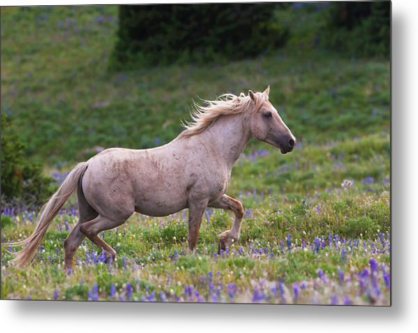 Cloud- Wild Stallion Of The West Metal Print
