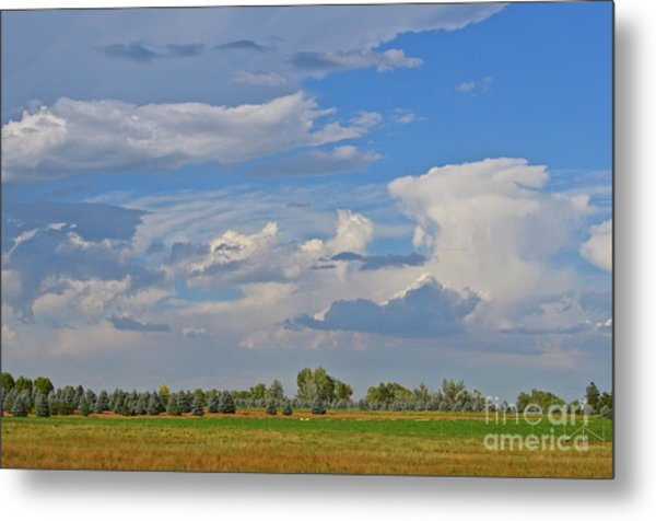 Clouds Aboive The Tree Farm Metal Print