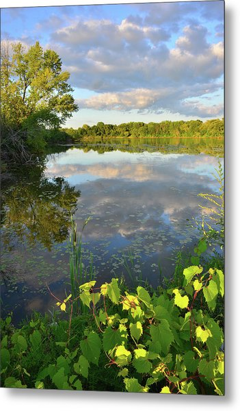 Clouds Mirrored In Snug Harbor Metal Print