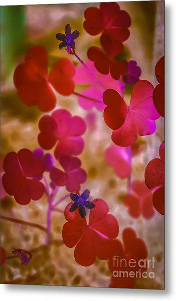 Clover - Abstract Metal Print