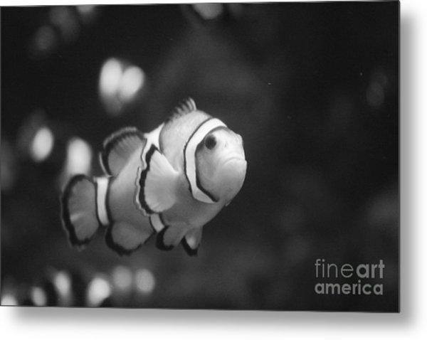 Clownfish Metal Print by Brenton Woodruff