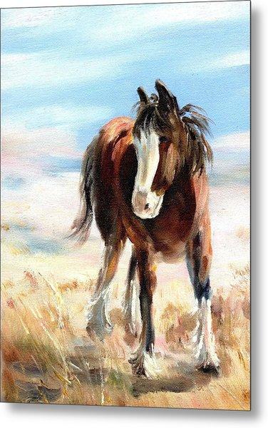 Clydesdale Foal Metal Print