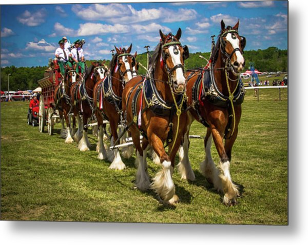 Metal Print featuring the photograph Budweiser Clydesdale Horses by Robert L Jackson