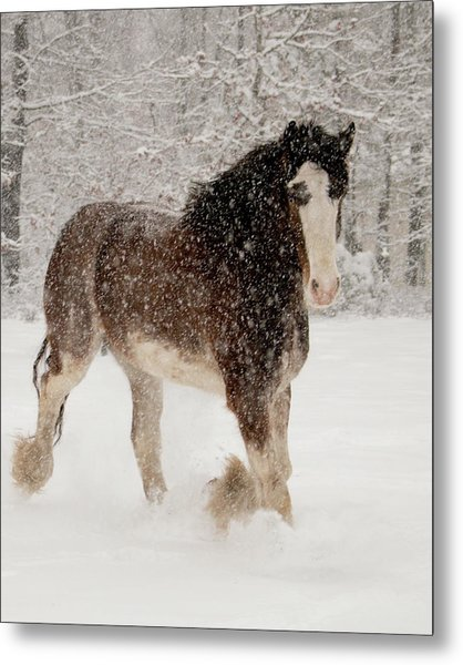 Clydesdale In The Snow Metal Print