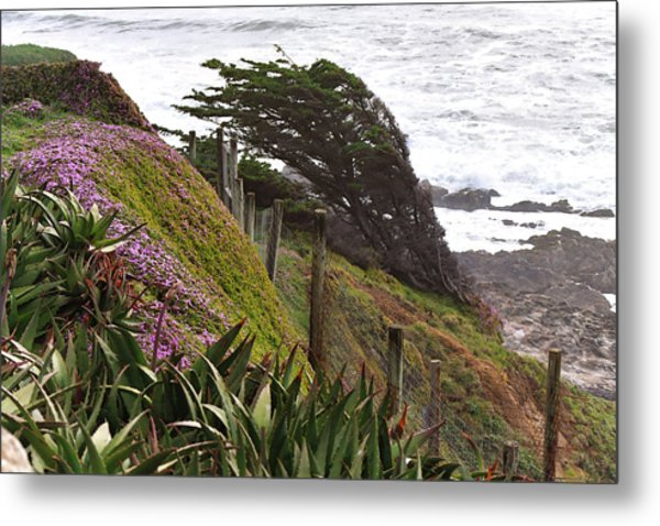 Coastal Windblown Trees Metal Print