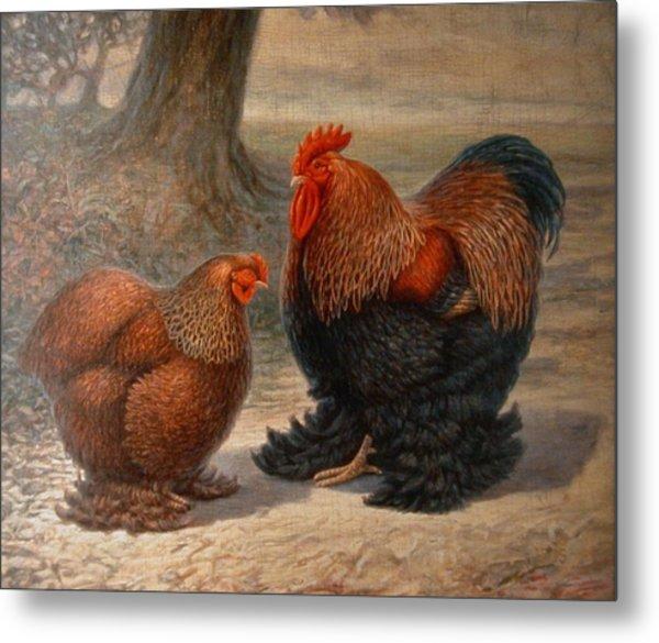 Cochin Chickens Metal Print
