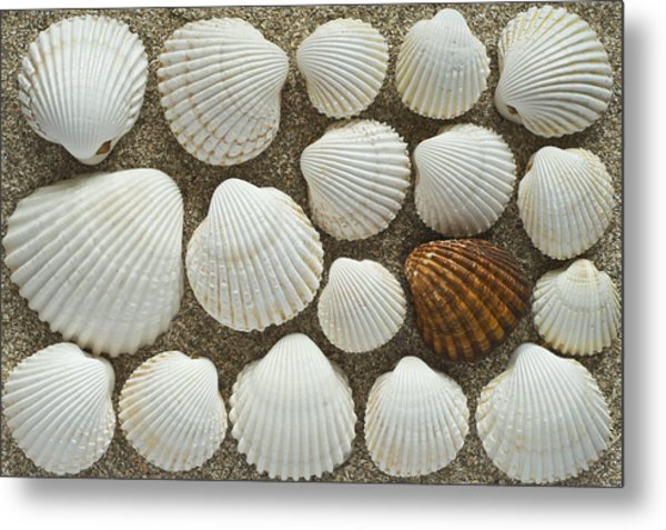 Cockles Collection Metal Print by Igor Voljch