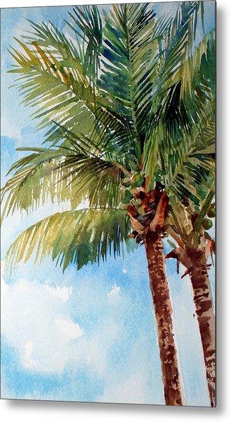 Coconut Palm Metal Print by Peter Sit