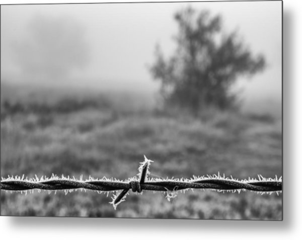 Cold Frosty Morning Metal Print