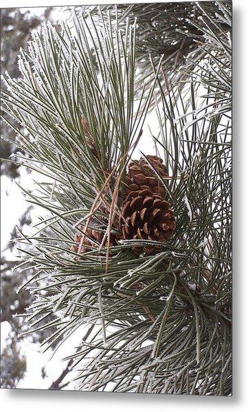 Cold Pine Metal Print