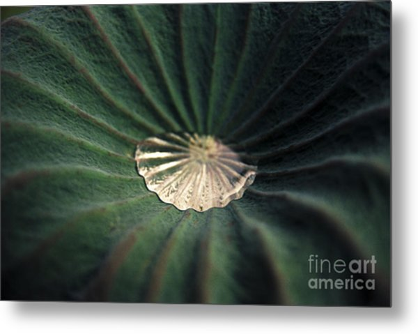 Collected Metal Print