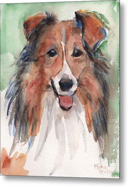 Collie, Shetland Sheepdog Metal Print