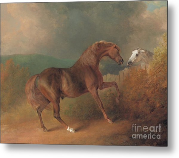 Colonel Thornton's Jupiter With A Grey Mare  Metal Print