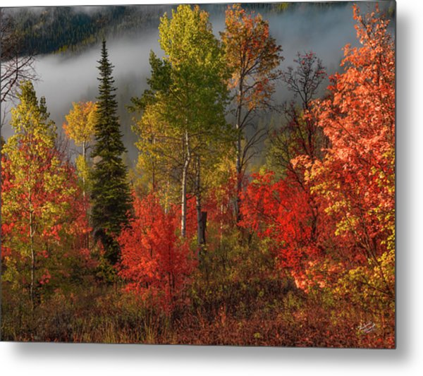 Color And Light Metal Print by Leland D Howard