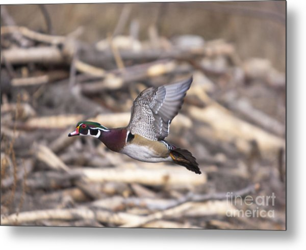 Color Flight II Metal Print