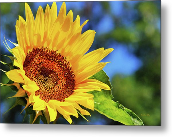 Color Me Happy Sunflower Metal Print